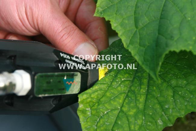 wageningen 121006 Proef gewasgezondheidsonderzoek bij plant research. <br /> Bladonderzoek bij jonge komkommerplanten.<br /> Foto frans Ypma APA-foto