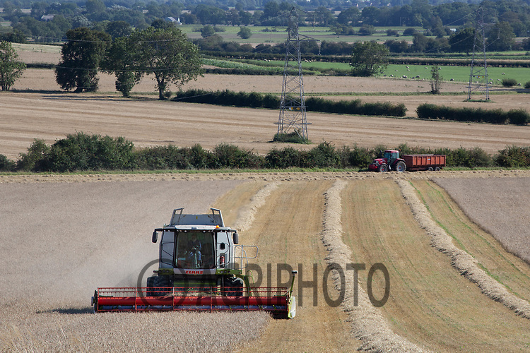9.9.2020 Harvesting Spring Barley in Lincolnshire <br /> ©Tim Scrivener Photographer 07850 303986<br />      ....Covering Agriculture In The UK.