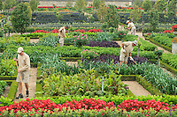 "France, Jardins du château de Villandry, les jardiniers dans le potager traité à la française // France, Gardens of the castle of Villandry, the gardeners in the kitchen garden treated like a ""jardin à la française""."