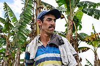 ARMENIA - COLOMBIA, 24-05-2021: Juan es el administrador de la finca de Richard Hurtado, ambos esperan que con el  maíz que han podido conseguir, las gallinas empiecen a colocar nuevamente huevos. A más de un mes del inicio del Paro Nacional, los campesinos han tenido que reinventar la forma para mantener sus cultivos y criaderos activos para minimizar las pérdidas por los bloqueos que aún se mantienen en las vías. Según cifras del Ministerio de Hacienda, las pérdidas diarias están en un monto de $480.000 millones de pesos colombianos, lo cual sumando la totalidad de los días del Paro Nacional, suman un total de $10,8 billones de pesos colombianos. / Juan is the administrator of Richard Hurtado's farm; both hope that with the corn they have been able to get, the hens will start laying eggs again. More than a month after the beginning of the National Strike, farmers have had to reinvent the way to keep their crops and farms active in order to minimize losses due to the blockades that still remain on the roads. According to figures from the Ministry of Finance, daily losses are in the amount of $480,000 million Colombian pesos, which adding the total number of days of the National Strike, add up to a total of $10.8 billion Colombian pesos. Photo: VizzorImage / Santiago Castro / Cont