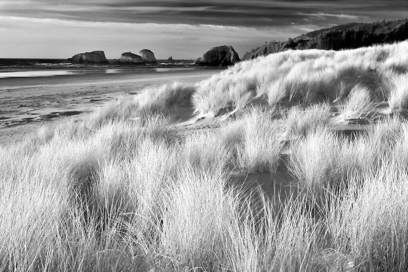 Dune grass and volcanic sea stacks. Cannon Beach. Oregon