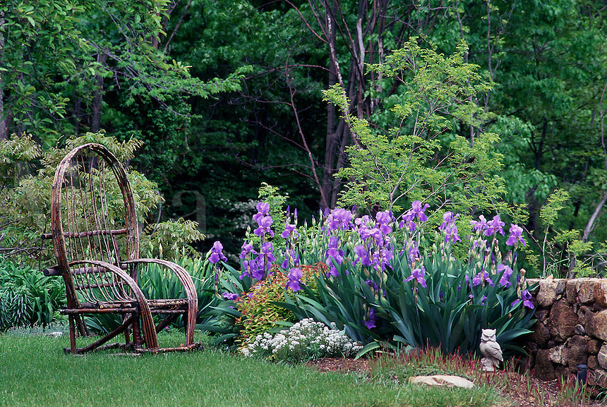 Garden with purple iris, stone wall and wicker chair.
