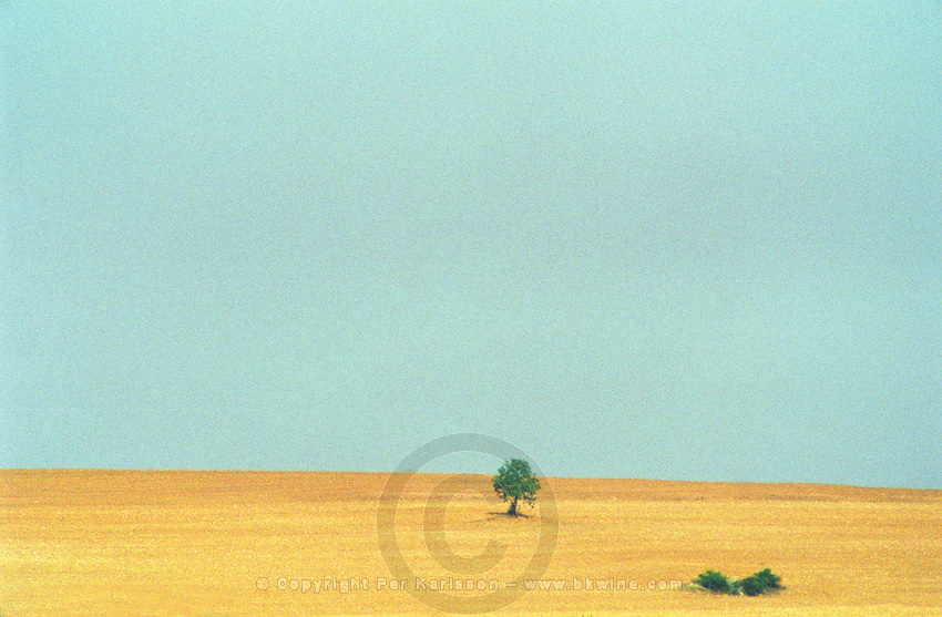 A dry field with a single tree and a bush, blue sky, evening sun haze, a scorching hot summer, Bourgogne