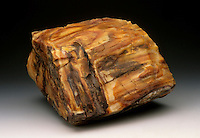 Opalized Wood. Petrified wood in which the organic material was replaced by opal, instead of other more common silicates like quartz. Colorado, USA.