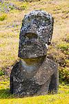 Moai, Rano Raraku