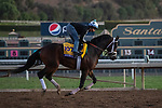 ARCADIA, CA  OCTOBER 25: Breeders' Cup Classic entrant Seeking the Soul, trained by Dallas Stewart, exercises in preparation for the Breeders' Cup World Championships at Santa Anita Park in Arcadia, California on October 25, 2019.  (Photo by Casey Phillips/Eclipse Sportswire/CSM)