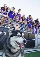 Dubs the mascot and Husky students take in some football on a sunny day at Husky Stadium.