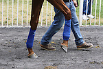June 4, 2015: A Bob Baffert trainee schools in the paddock at Belmont Park, Elmont, NY. Joan Fairman Kanes/ESW/CSM