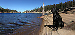 Fin checks out Kinney Reservoir, above Markleeville, Ca., on Monday, Oct. 17, 2011..Photo by Cathleen Allison