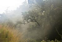 Steam rising through the ohia lehua trees at Volcanoes National Park