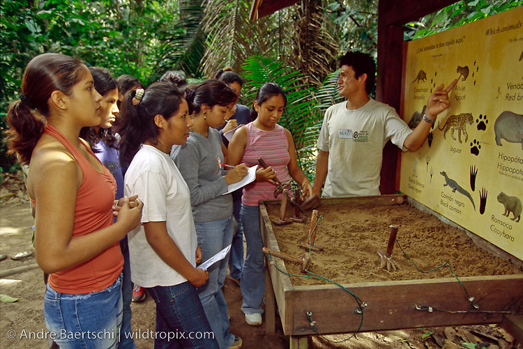 Students from Puerto Maldonado studying animal tracks at the Lago Sandoval visitor's center of Tambopata National Reserve, lowland tropical rainforest, Madre de Dios, Peru.