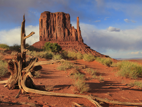 Tree stump with the Mittens rock formation, Monument Valley Navajo Tribal Park, Arizona. .  John offers private photo tours in Arizona and and Colorado. Year-round.