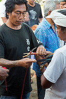 Bali, Indonesia.  Cock Fighting in an Indonesian Village.  Attaching a Blade to the Rooster's Foot.
