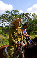 Older cowboys riding horses collecting cows in farmland country near Havana in Havana Providence Habana