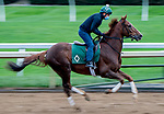 October 30, 2020: Channel Maker, trained by trainer William I. Mott, exercises in preparation for the Breeders' Cup Turf at Keeneland Racetrack in Lexington, Kentucky on October 30, 2020. Scott Serio/Eclipse Sportswire/Breeders Cup/CSM