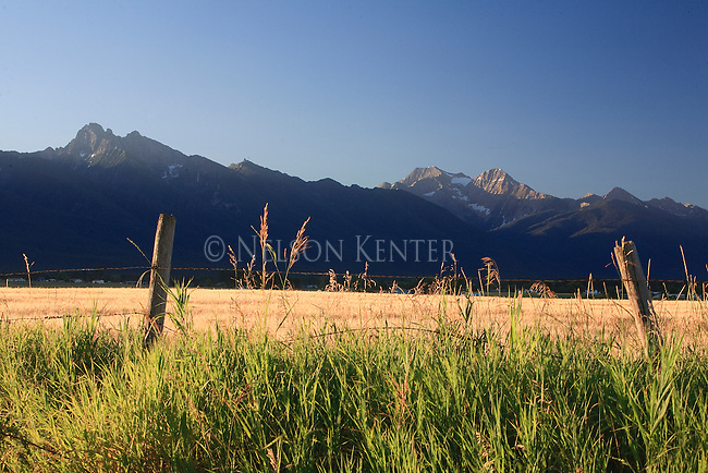 Mission Mountains and wheat field at sunrise