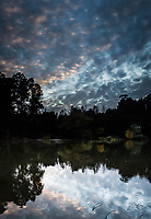 Day's End at the Don Castro Regional Park, Hayward, California.  Multiple images have been combined into a single vertical panoramic capturing the sky, full of buttermilk clouds, reflecting in the fishing lake below and tree filled shoreline in between.