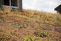 Green roof of succulents in Maryland rooftop garden
