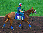 October 27, 2014:  Main Sequence, trained by Graham Motion, exercises in preparation for the Longines Breeders' Cup Turf at Santa Anita Race Course in Arcadia, California on October 27, 2014. John Voorhees/ESW/CSM