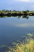 Zambesi, Zambia. Riverscape with trees on the river bank reflected in the blue  water.