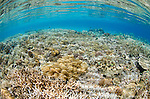 A beautiful shallow coral reef at Batu Monco, Komodo National Park, Indonesia, Pacific Ocean
