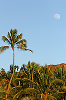 Full moon over palm trees as seen from Waikiki on Oahu