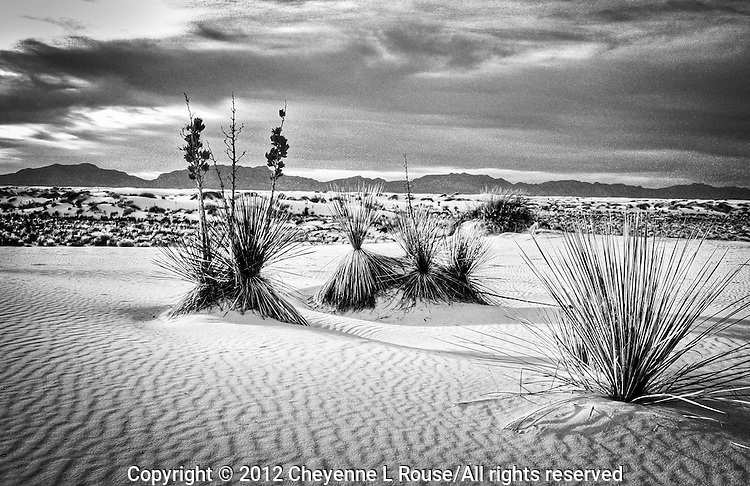 White Sands - New Mexico (BW)<br /> White Sands National Monument