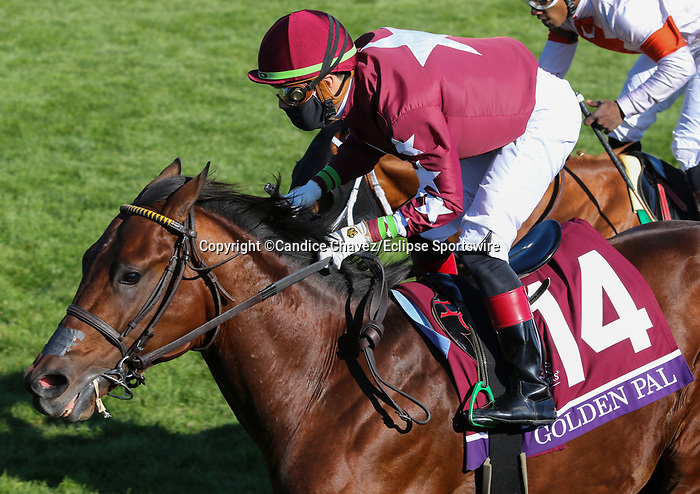 November 6, 2020: Golden Pal, ridden by Irad Ortiz, Jr., wins the Juvenile Turf Sprint on Breeders' Cup Championship Friday at Keeneland on November 6, 2020: in Lexington, Kentucky. Candice Chavez/Breeders Cup/Eclipse Sportswire/CSM