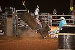 SEBRA - Danville, VA - 8.15.2015 - Bulls & Action