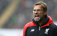 Liverpool manager Jurgen Klopp shouts  in frustration during the Barclays Premier League match between Swansea City and Liverpool played at the Liberty Stadium, Swansea on 1st May 2016