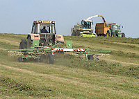 Forage harvesting a third cut of silage from a new clover and ryegrass ley on C. G. Denton's Park Farm, Upper Lambourn, West Berkshire. It will go on top of the maize, already harvested, and make up part of the ration for the 200 Holstein Friesian milkers.