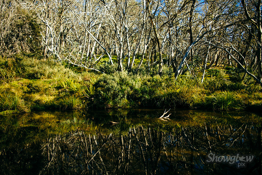 Image Ref: HC132<br /> Location: Clear Hills Track, Mt Buller<br /> Date: 22 March, 2015