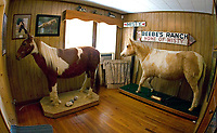 Beebe Ranch and Misty of Chincoteague-related images, from 2009