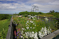 Celia Thaxter's recreated garden on Appledore Island, Isles of Shoals. Photograph by Peter E. Randall.