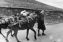 Iraq 1974 <br /> The resumption of hostilities, arms'supply by mules for the peshmergas   <br /> Irak 1974 <br /> La reprise de la lutte armée, transport d'armes a dos de mulets pour les peshmergas