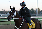 Havre de Grace, trained by Larry Jones and to be ridden by Ramon Dominguez , exercises in preparation for the 2011 Breeders' Cup at Churchill Downs on  October 31, 2011.