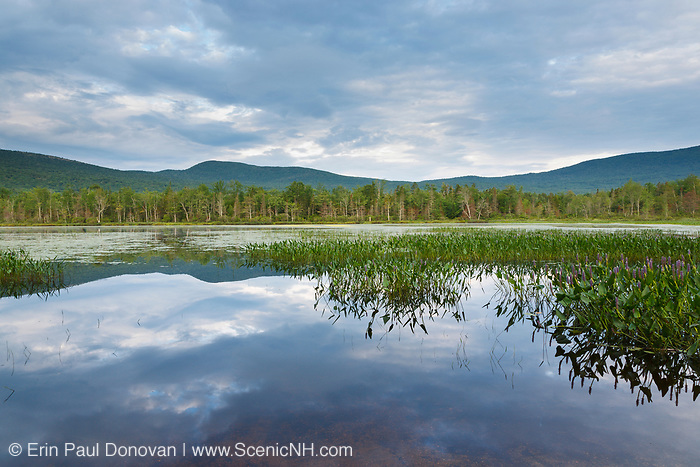 Elbow Pond in Woodstock, New Hampshire on a cloudy summer day. Species of fish in this pond include chain pickerel, yellow perch and smallmouth bass. This area was part of the Gordon Pond Railroad, which was a logging railroad in operation from 1907-1916.