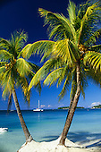 Negril, Jamaica, West Indies. Three palm trees at the edge of the blue sea, white sand, blue sky and island with catamaran pleasure boat.