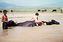 Iran 1981.Children with buffalos in a pond