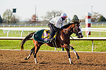 November 5, 2020: Tiz The Law, trained by trainer Barclay Tagg, exercises in preparation for the Breeders' Cup Classic at Keeneland Racetrack in Lexington, Kentucky on November 5, 2020. Dan Heary/Eclipse Sportswire/Breeders Cup/CSM