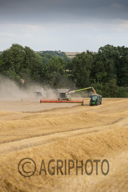 Harvesting Winter Wheat<br /> Picture Tim Scrivener 07850 303986<br /> ….covering agriculture in the UK….