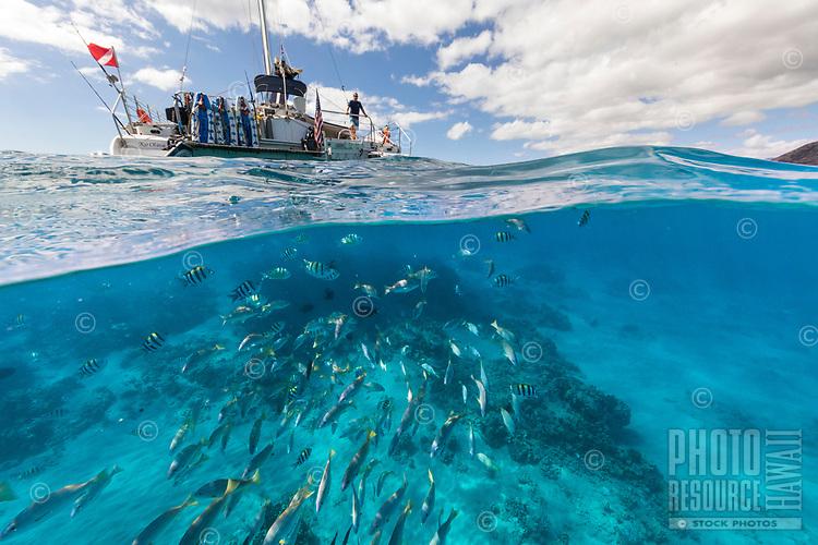 A catamaran anchored off the leeward coast of O'ahu, with tropical fish swimming nearby.