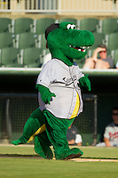 """Kannapolis Intimidators mascot """"Tim E. Gator"""" runs the bases between innings of the South Atlantic League game against the Rome Braves at CMC-Northeast Stadium on August 25, 2013 in Kannapolis, North Carolina.  The Intimidators defeated the Braves 9-0.  (Brian Westerholt/Four Seam Images)"""