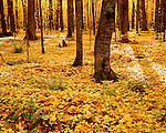 Ottawa National Forest, Gogebic County, Michigan, October, 1991