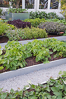 Vegetabel Garden, Raised Beds