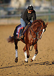 4 November 2010:  Rough Sailing, trained by Michael Stidham and to be ridden by jockey Rosie Naparavnik, during work outs for the 2010 Breeders Cup at Churchill Downs in Louisville, Kentucky.(Scott Serio/Eclipse Sportswire)