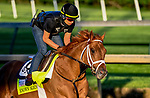 April 27, 2021: Known Agenda, trained by trainer Todd Pletcher, exercises in preparation for the Kentucky Derby at Churchill Downs on April 27, 2021 in Louisville, Kentucky. John Voorhees/Eclipse Sportswire/CSM