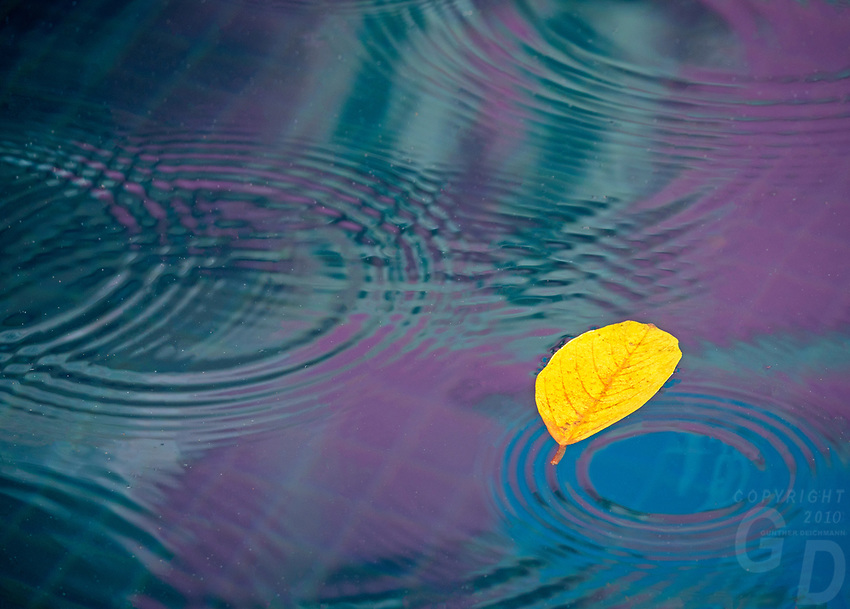 Colourful reflection on water and leaf. Cambodia