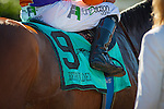 """September 26, 2015: Beholder with Gary Stevens up win the Breeders' Cup """"Win and You're In"""" Zenyatta Stakes at Santa Anita Park in Arcadia, California. Zoe Metz/ESW/CSM"""