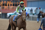 January 23, 2021: Getridofwhatailesu (3) with jockey Joseph Rocco, Jr. aboard after winning the Pippin Stakes at Oaklawn Racing Casino Resort in Hot Springs, Arkansas. ©Justin Manning/Eclipse Sportswire/CSM